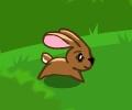 ריצת הארנב