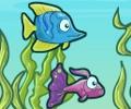 אליפות הדגים